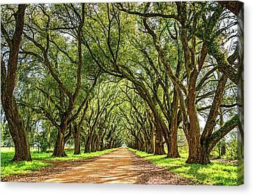 Southern Lane 5 Canvas Print
