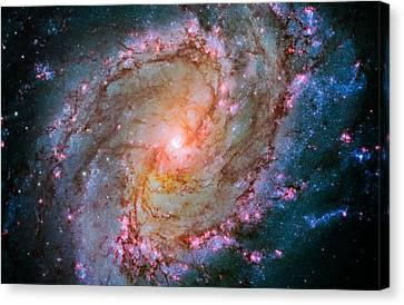 Southern Pinwheel Galaxy - Messier 83 -  Canvas Print by Jennifer Rondinelli Reilly - Fine Art Photography