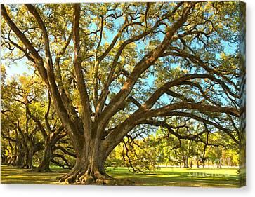 Southern Plantation Oak Trees Canvas Print by Adam Jewell