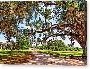 Southern Serenity Canvas Print by Steve Harrington