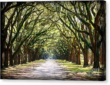Southern Way Canvas Print by Carol Groenen