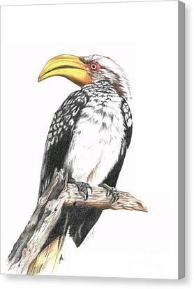 Southern Yellow Billed Hornbill Canvas Print by Cindy Skidgel