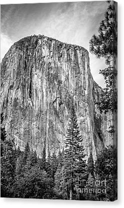 Southwest Face Of El Capitan From Yosemite Valley Canvas Print by RicardMN Photography