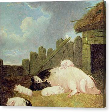 Sow With Piglets In The Sty  Canvas Print by John Frederick Herring Snr