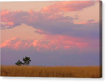 Spacious Skies Amber Waves Of Grain Boulder County Canvas Print by James BO  Insogna