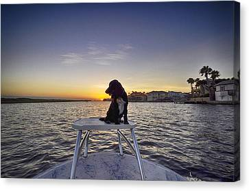 Spaniel At Sunset Canvas Print