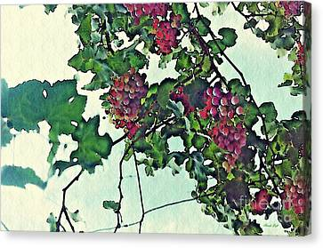 Spanish Grapes Canvas Print by Sarah Loft