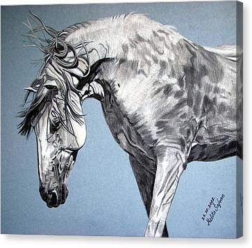 Spanish Horse Canvas Print by Melita Safran