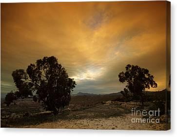 Spanish Landscapes Canvas Print by Angel  Tarantella