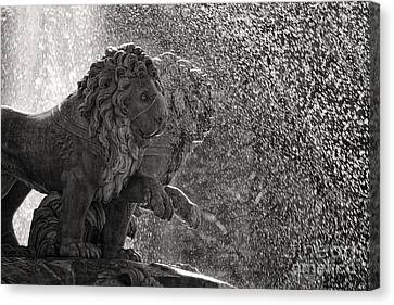 Spanish Lions Canvas Print by Rod McLean