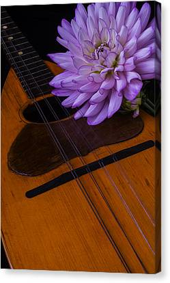 Spanish Mandolin And Dahlia Canvas Print by Garry Gay