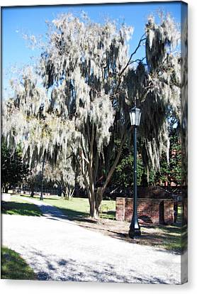 Spanish Moss  Canvas Print by Brittany H
