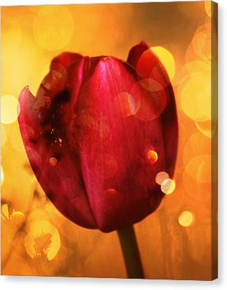Sparkle Of The Tulip Canvas Print by Cathie Tyler