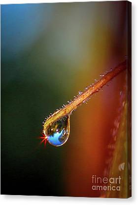 Sparkling Drop Of Dew Canvas Print by Tom Claud