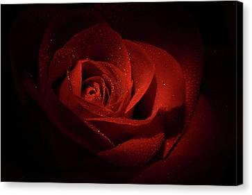 Sparkling Red Rose Canvas Print by Lori Deiter