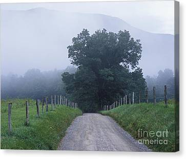Sparks Lane - Fm000117 Canvas Print by Daniel Dempster