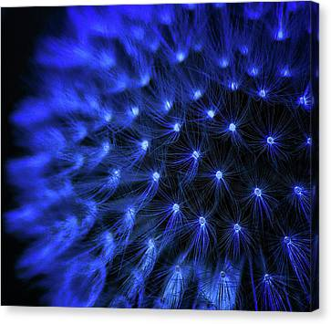 Sparks Canvas Print by Martin Newman
