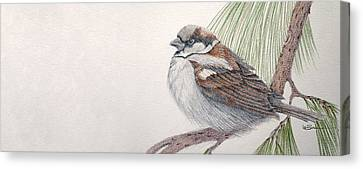 Sparrow Among The Pines Canvas Print by Leslie M Browning
