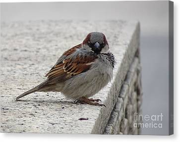 Canvas Print featuring the photograph Sparrow by Angela DeFrias