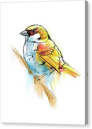 Sparrow Digital Watercolor Painting Canvas Print