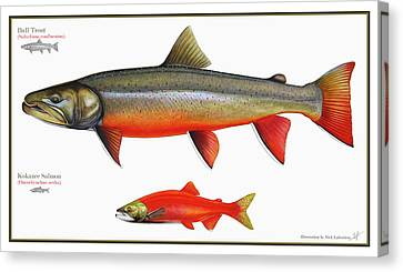 Spawning Bull Trout And Kokanee Salmon Canvas Print by Nick Laferriere
