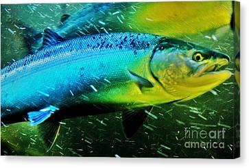 Spawning Home Canvas Print by Frank Larkin