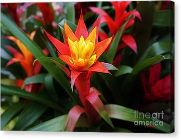Special Canvas Print by John Clark