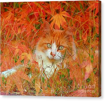 Special Kitty Canvas Print