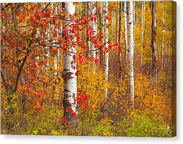 Special Place In The Forest Canvas Print by Tim Reaves