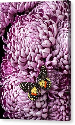 Speckled Butterfly On Red Mum Canvas Print by Garry Gay