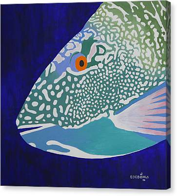 Speckled Parrotfish Canvas Print by John Edebohls