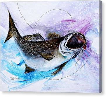 Speckled Trout Canvas Print - Speckled Trout by J Vincent Scarpace