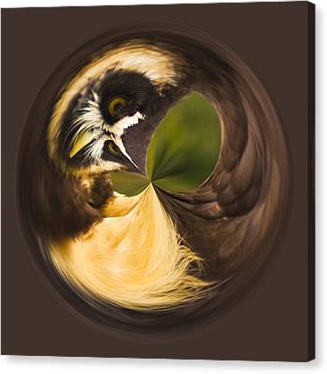 Canvas Print featuring the photograph Spectacled Owl Orb by Bill Barber
