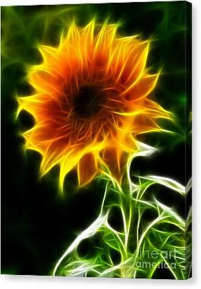 Spectacular Sunflower Canvas Print by Pamela Johnson