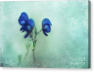 When The World Leaves You Speechless Canvas Print by Priska Wettstein