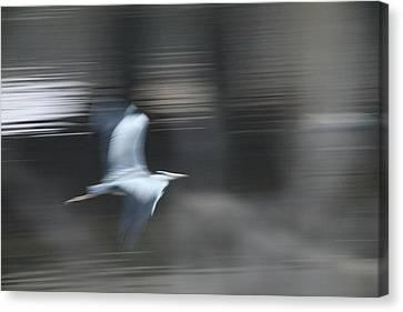 Speed Of Bird Canvas Print