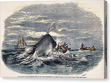 Rowboat Canvas Print - Sperm Whale Attack, 1851 by Granger