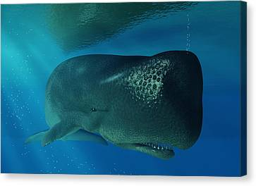 Sperm Whale Canvas Print by Daniel Eskridge