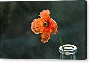 Spicy Red Poppy Canvas Print