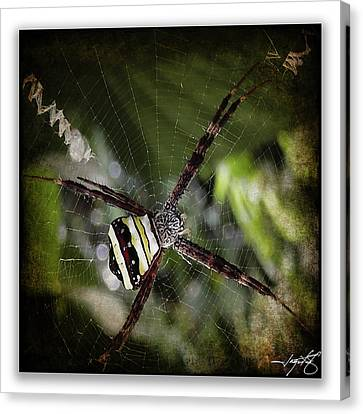 Zoolog Canvas Print - Spider 31 by Ingrid Smith-Johnsen