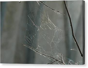 Spider Art Canvas Print by Trish Hale