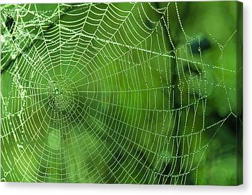 Spider Dew Canvas Print