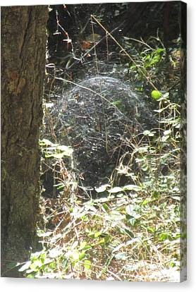 Canvas Print featuring the photograph Spider Dome by Marie Neder