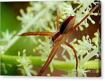 Spider In The Flowers Canvas Print by Michael Eingle