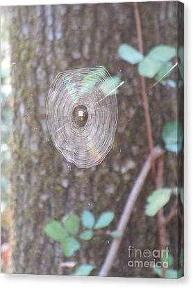 Canvas Print featuring the photograph Spider In The Round by Marie Neder