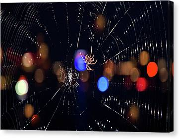 Canvas Print featuring the photograph Spider by Joann Vitali