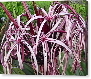 Spider Lily Canvas Print by Athala Carole Bruckner
