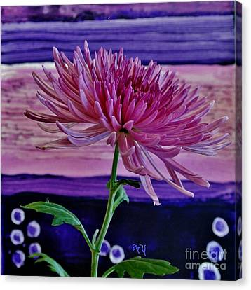 Canvas Print featuring the photograph Spider Mum With Abstract by Marsha Heiken