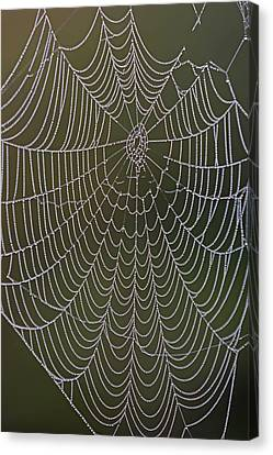 Canvas Print featuring the photograph Spider Web And Morning Dew by Juergen Roth