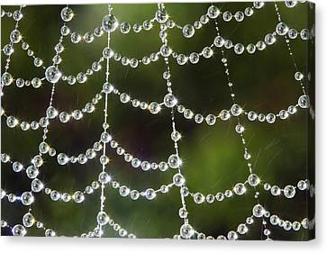 Spider Web Decorated By Morning Fog Canvas Print by William Lee